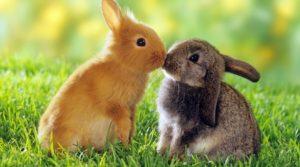 Разведение кроликов в домашних условиях для начинающих: с чего начать?