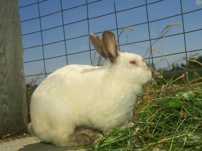 Болезни ЖКТ у кроликов
