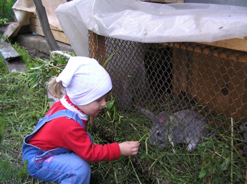 Девочка кормит кролика