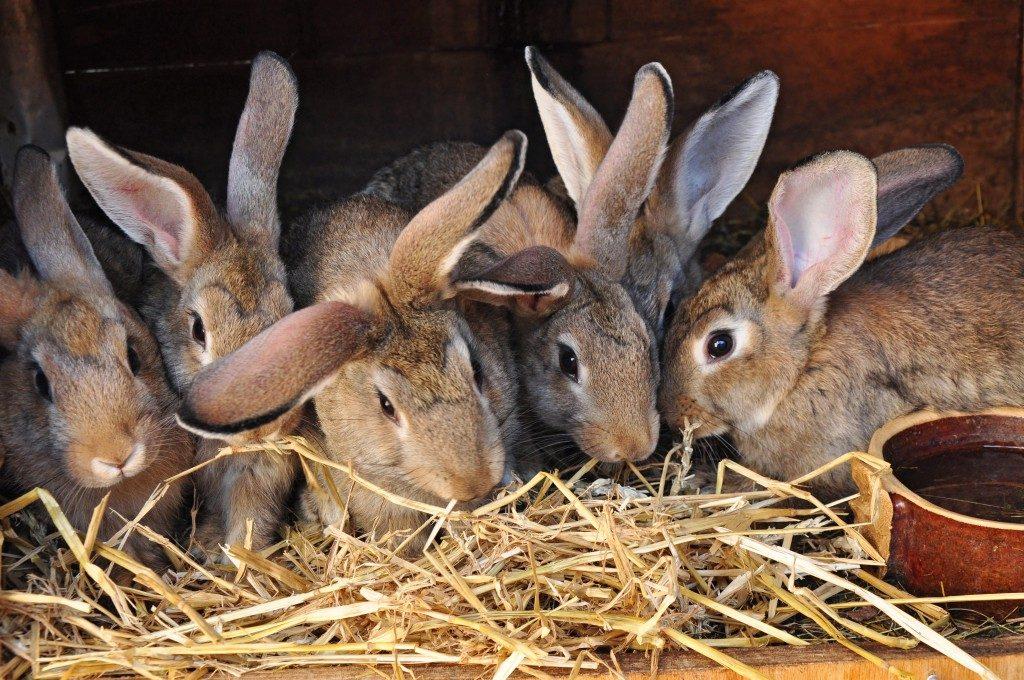 Сено для кормления кроликов