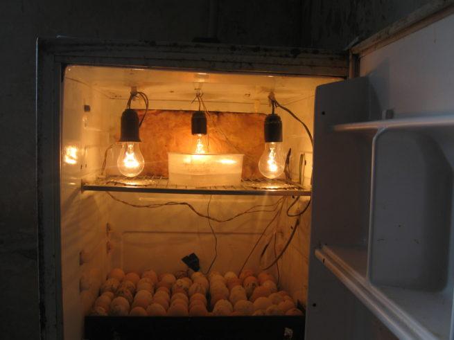 Инкубаторы своими руками в домашних условиях 97