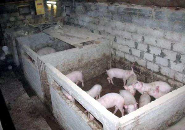 Свинарник из кирпича