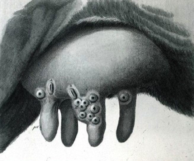 Пузырьки на вымени при оспе
