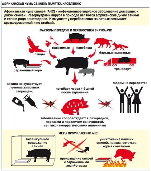 Африканская чума свиней профилактика
