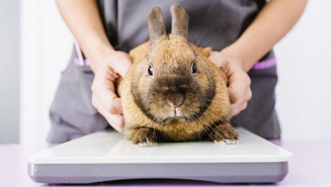 Лечение кролика от поноса