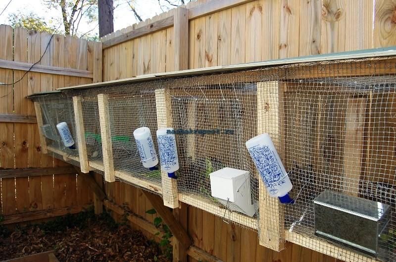 Разведение кроликов в домашних условиях для начинающих: с чего начать