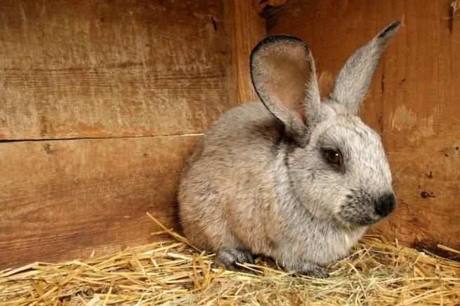 Болезни кроликов: фото и описание распространенных заболеваний