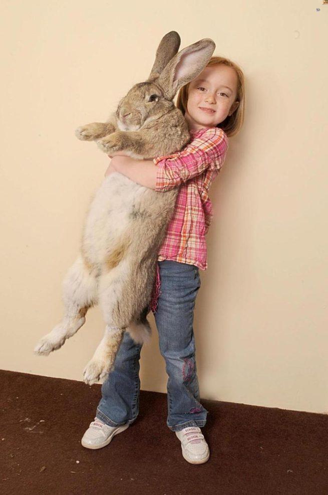 Чем кормить кроликов, чтобы они набирали вес: полезные рекомендации
