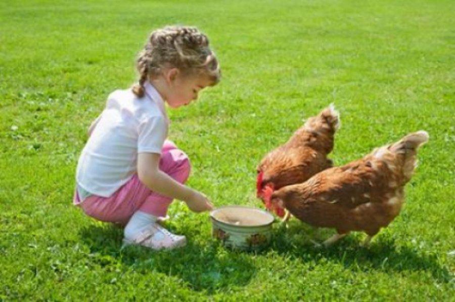 Девочка кормит кур