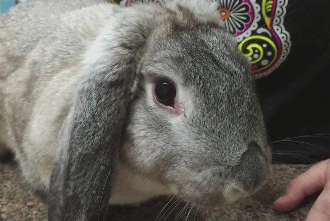 болезни кроликов и их лечение фото
