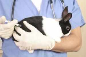 Кролик на руках у ветеринара