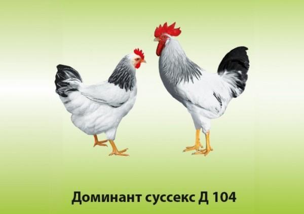 Доминант Суссекс Д104