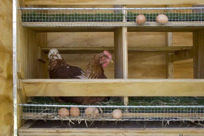 Гнезда для кур со сборником для яиц