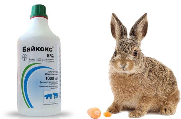 Байкокс для лечения кроликов