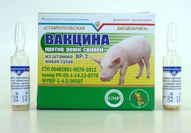Вакцина против рожи у свиней