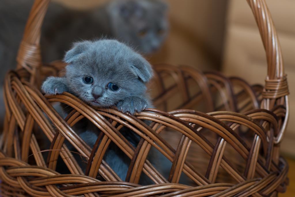 Какой запах не любят кошки больше всего