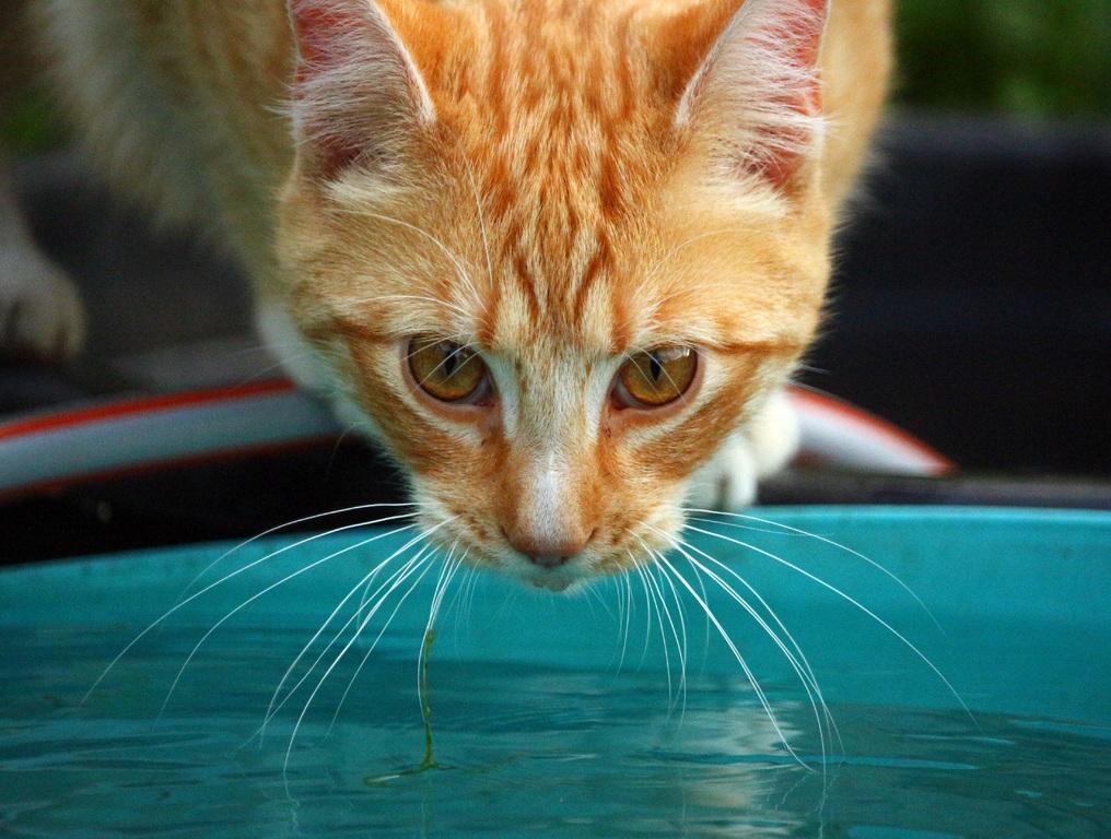 Почему кошки боятся воды