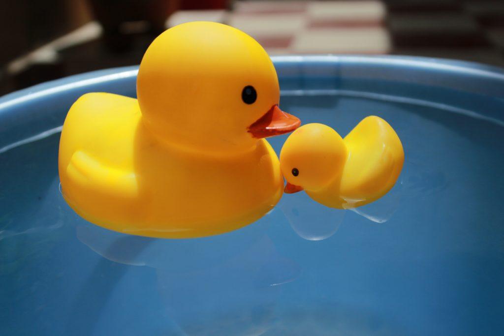 Чем можно кормить уток на пруду