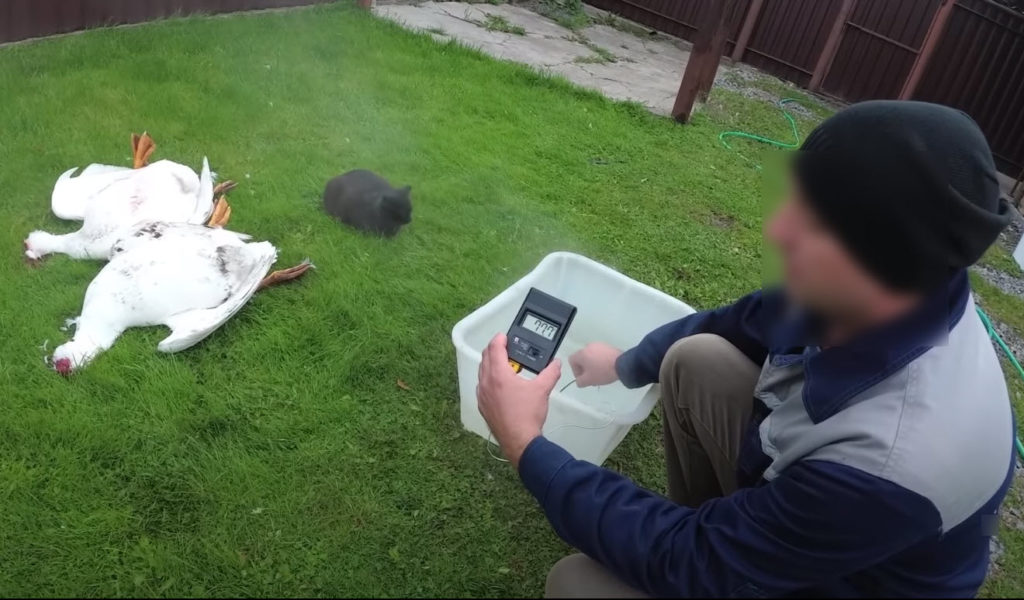 Как ощипать гуся быстро в домашних условиях