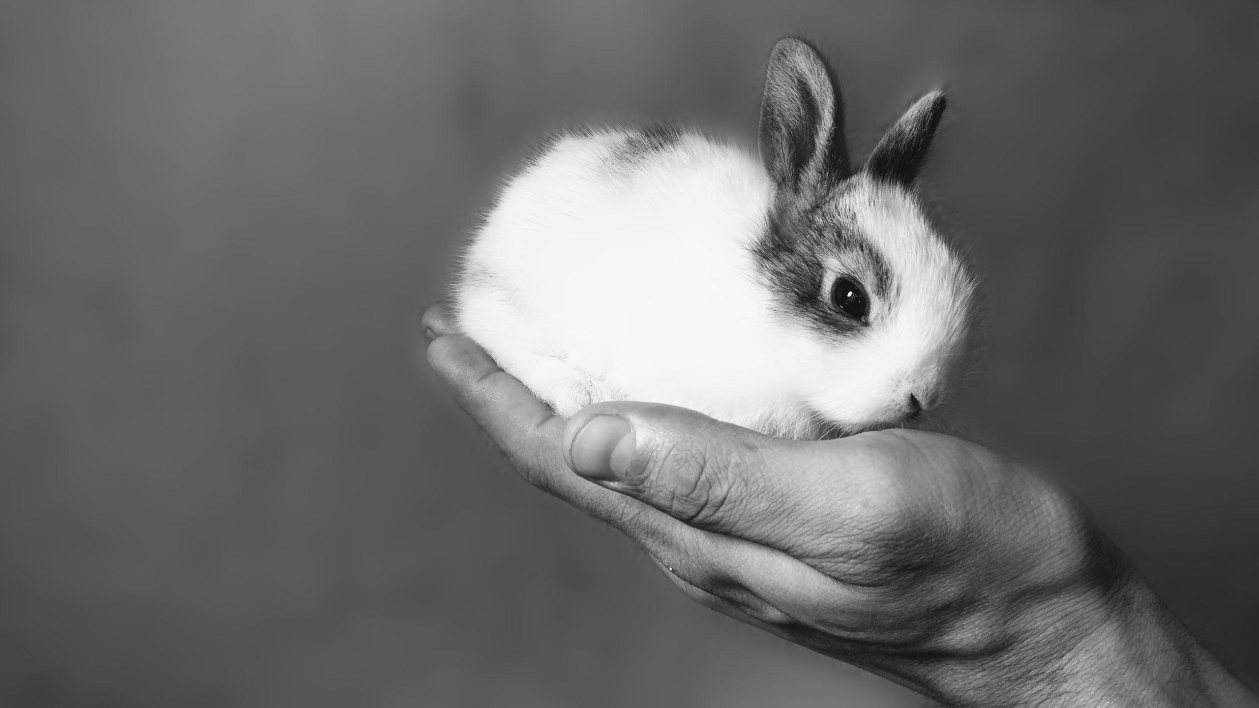 Можно ли давать кролику капусту