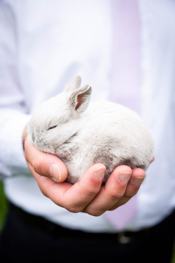 Можно ли кроликам капусту